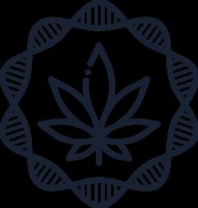 Cannabis Doctors favicon final