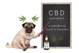 CBD is a chemical compound present in the cannabis plant. It can help dogs, cats, and other pets the same way it helps humans.